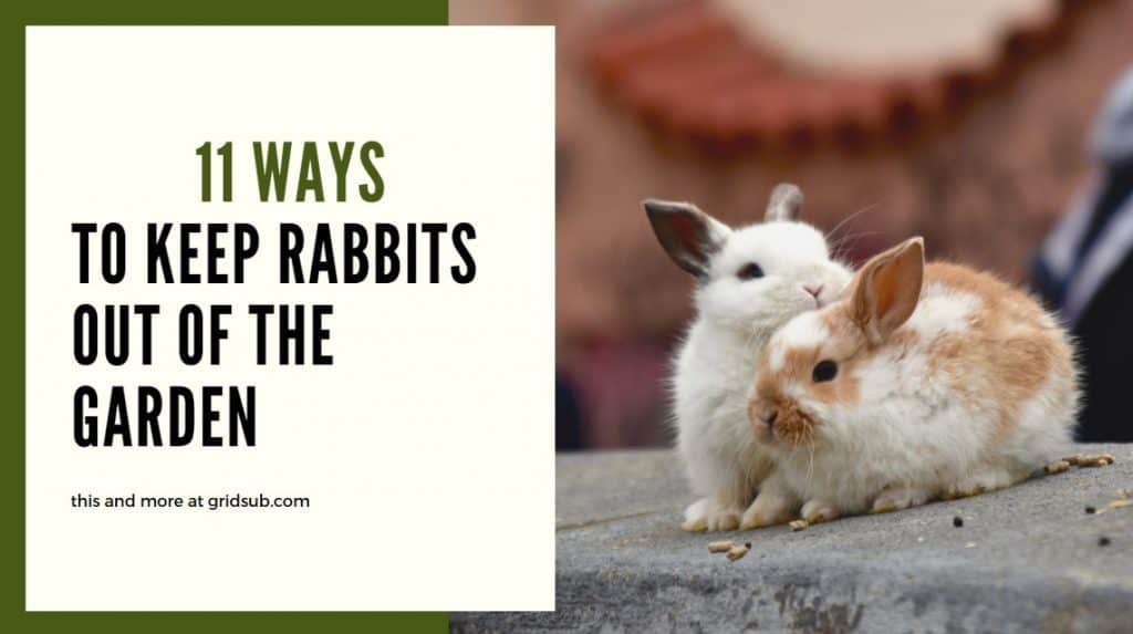 How to Keep Rabbits Out of the Garden - Grid Sub