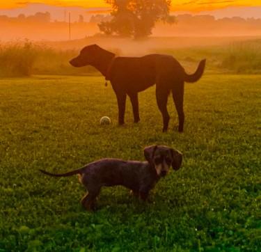 a farm dog to protect livestock